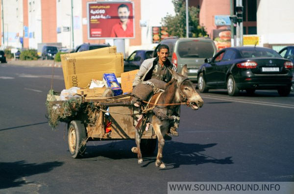 In the streets apart cars and motorbikes are frequently moving carts pulled by donkeys, mules or horses
