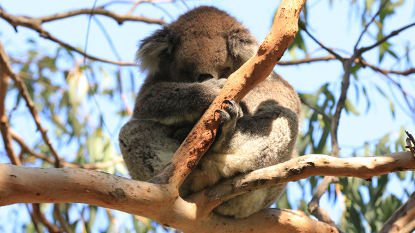 We saw koalas, but their sound was unable to write to us,